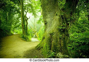 skog, gångstig