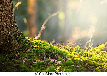 skog golvbeläggning, in, höst, med, stråle av ljust