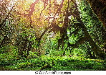 skog, grön