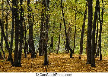 skog, in, höst