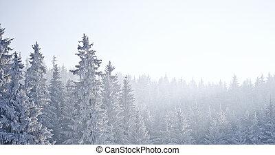 skog, med, frost