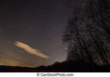 skog, och, stjärna, sky