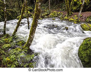 skog,  Oregon