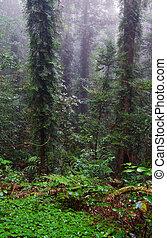 skog, regna