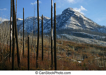 skog skjut