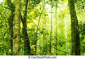skog, solljus