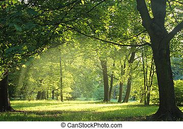 skog, sommar, träd