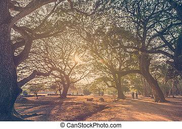 skog, stort träd, med, sol lätta, in, publik parkera