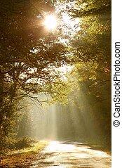 skog, väg, in, höst, morgon