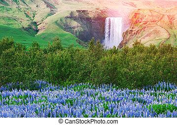 Skogafoss - Famous Skogafoss waterfall on Skoga river....