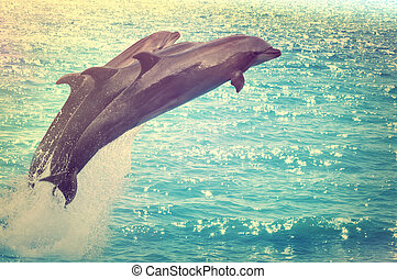 skokowy, delfiny