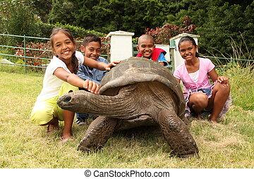 skola skämtar, med, jättelik sköldpadda