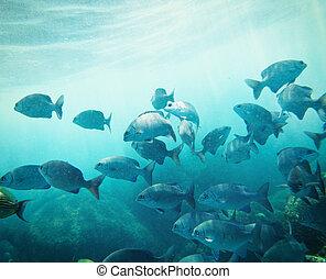 skole, fish