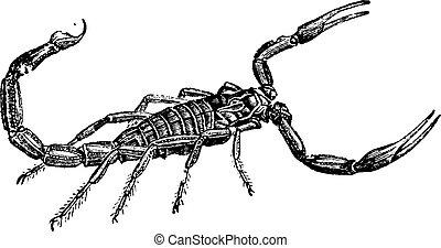 Stich Skorpion Abbildung Stich Illustration Skorpion Vektor