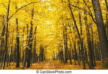 skov, ind, efterår