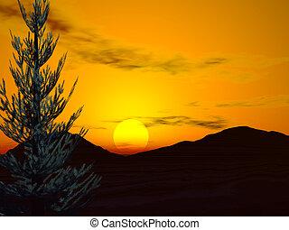 skov, solopgang