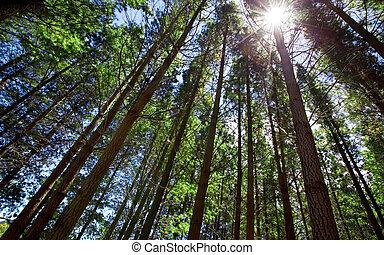 skov, solskin