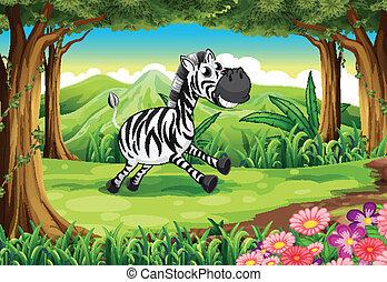 skov,  zebra