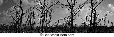 skrämmande, eller, silhuett, forest., klagovisa, sky, concept., halloween, träd, död, dag, mörk, bakgrund., hopplös, dramatisk, bakgrund, natt, förtvivlan, death., fasa, night.