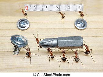skruva, linjal, mått, skruvmejsel, myror, transporter, teamwork, lag