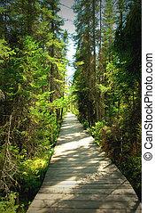 skugga, skog