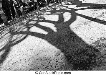 skuggor, vit, svart, träd