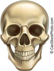 skull., 3d, realista, vector, icono