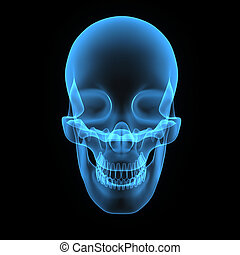 Skull blue front