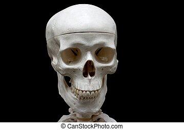 Skull - Closeup of a skull isolated on black