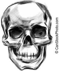 Skull. Hand drawn. Vector.