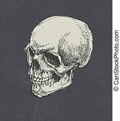 Skull. Hand drawn. Vector. - Skull. Hand drawn. Vector eps8