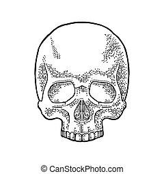 Skull human. Black vintage vector illustration. For poster...