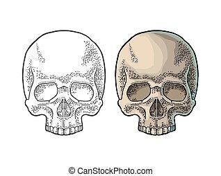 Skull human. Black vintage vector illustration. - Skull...