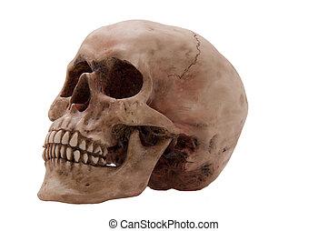 Skull  - Human skull, side view on over white.