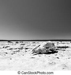 Skull in Desert Black and White