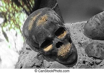 skull in grave buried