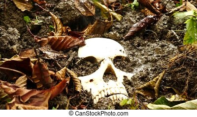 Skull in the ground in the rain among the fallen dirty...