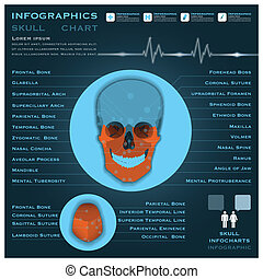 Skull Infographic Infocharts Health And Medical