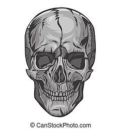 Skull isolated on a white background. Vector graphics.