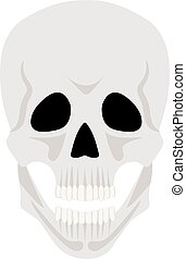 Skull isolated on white