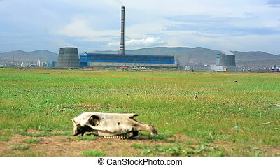 Skull lying on grass next to power plant