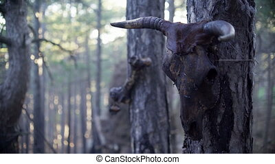 Skull of a cow in the forest. Sacrificial totem of mountain...