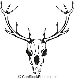 skull of deer with horns - Vector an illustration of skull...