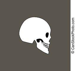 Skull of Human Profile View Vector Illustration - Skull of...