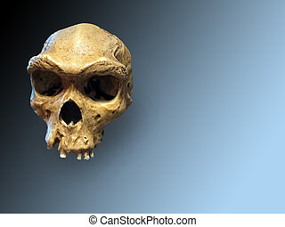 Skull of neanderthal on degraded blue