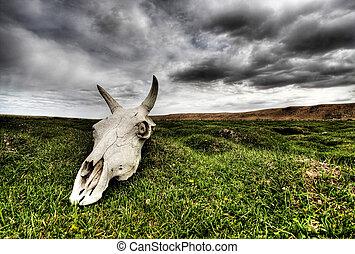 Skull on green plain