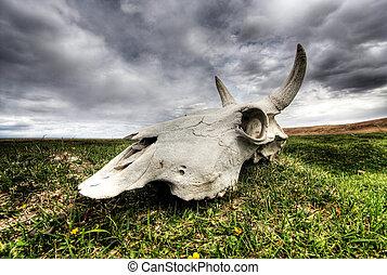 Skull on plain