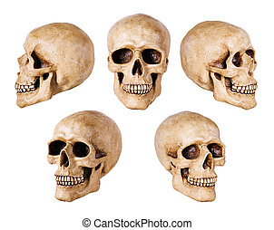 synthetical skull many angle view on white with clipping path