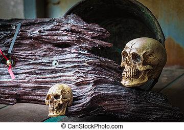Skull on wooden