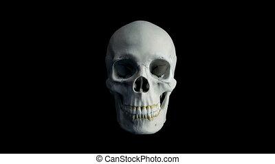 Skull Opens Mouth Eats Camera POV - 4 Versions